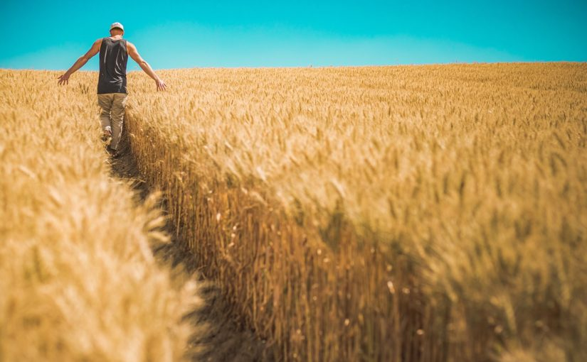 Nawozy organiczne – najlepsza możliwość?